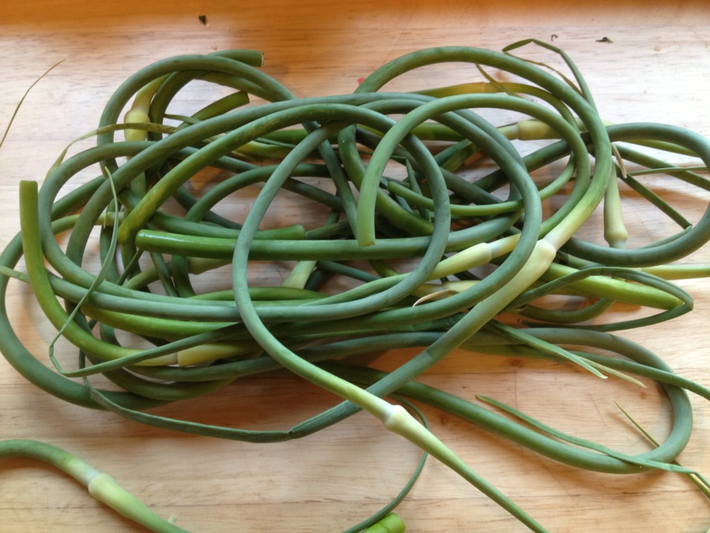 Well Dined | Garlic Scapes